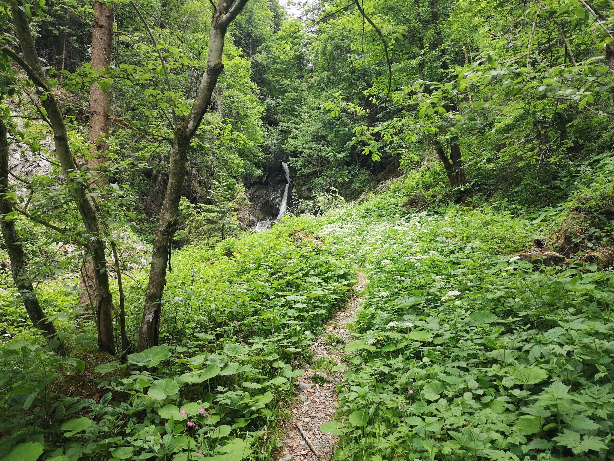 Scheffau_Wasserfall Breuergraben_Wilder Kaiser