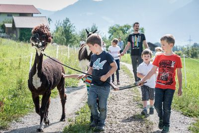 FRIDAY: with the alpacas and the llama Konrad at the Umlberg (Children's Day)) 1